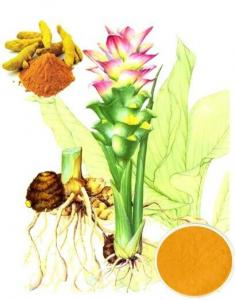 China curcumin extract 95% on sale