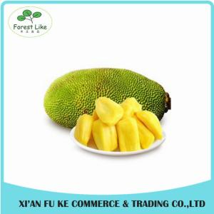 China High Quality Natural Jackfruit Extract Powder on sale