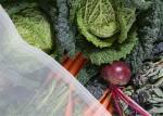 High Density Polyethylene Insect Protection Netting / Plastic Mesh Netting FDA