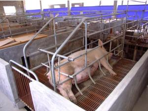 China Pig Farrowing Pen, Pig Farm Equipment on sale