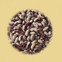 China Kidney Bean on sale