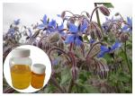 Omega 6 Cosmetic Plant Extract , Borage Oil Supplement For Skin Disorder