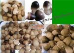 400g Canned Straw Mushroom In Tin White Yellow / Straw Mushroom In Brine