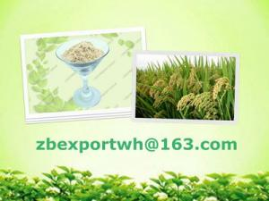 China Rice protein on sale