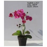 Orchid flower with pot