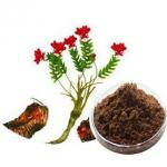 Plant extract powder Rhodiola Rosea Bark Extract Brown-red powder natural food supplements