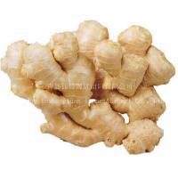 Ginger, Fresh Ginger, Chinese Ginger