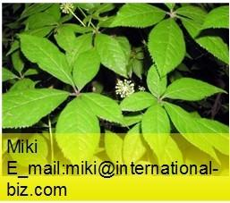 China Nettle Root Extract on sale
