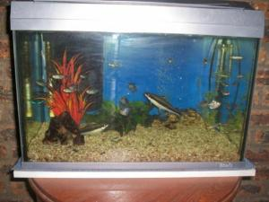 China Mini Desktop Fish Tank Aquarium on sale