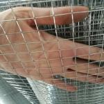 BWG16 hot dipped  Galvanized Welded Wire Mesh for Construction for philippine market