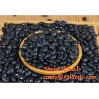 China Black kidney bean BLACK KIDNEY BEAN Chinese supplier High quality cindy@xtlandi.com on sale