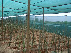 China shade net of agriculture on sale