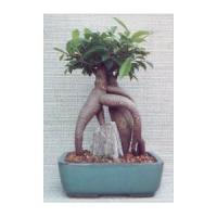 China Live outdoor artificial Landscaping bonsai (Ficus tree) on sale