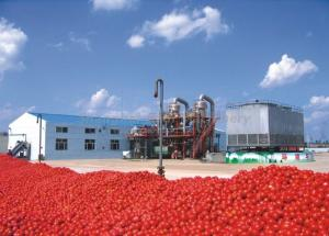 China UHT Sterilizing Tomato Paste Production Line For Apple Jam / Shea Butter / Red Pepper Paste on sale