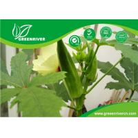 Yellow Okra seeds / ladies finger seeds with FDA Certificate