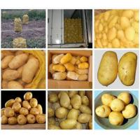 Cold Storage Yellow Organic Potatoes Nature For Vegatable Shop