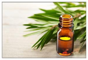 China 100% pure tea tree oil for making homemade cleaning,Natural Premium Melaleuca oil for laundry detergents on sale