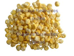 China Freeze Dried Sweet Corn Ingredients of Instant Soup Noodles on sale