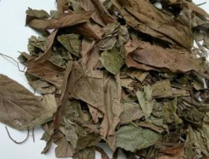 China Desmodium triquetrum L DC whole part dried use as herb medicine for nephritis kidney disease on sale