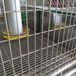 Hot Dipped Galvanized 24 Cells Farm Rabbit Cage With Automatic Cleaning System