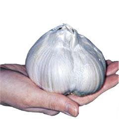 China import chinese garlic on sale