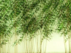 China Bamboo antioxidant,bamboo leaves extract,Total flavonoid ,AOB on sale