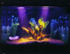China New fashion fish tank/aquarium on sale