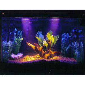 China New fashion fish tank/aquarium on sale