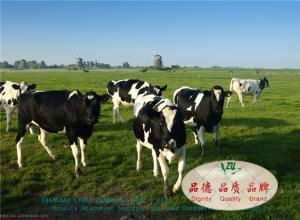 China Ruminants Feed Guar Meal Korma , Rice Gluten Meal In Protein 55.00 – 60.00 % on sale