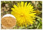 Dandelion Root Plant Extract Powder Flavones Improving Immunity For Dietary Supplement