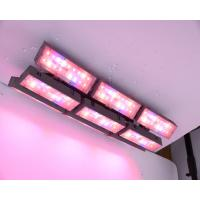 300W NR, XL spectrum light Adjust plant light LED Growing Light  for  foliage plants  hanging plant light