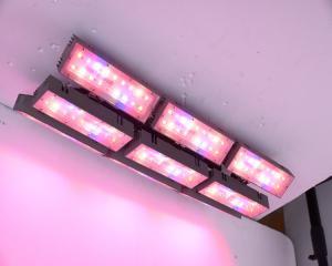 China 300W NR, XL spectrum light Adjust plant light LED Growing Light  for  foliage plants  hanging plant light on sale