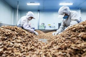 China Trimmed Palm Oil Crispy Fried Onion For Burgers on sale