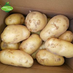 China Fresh Potato Seller,2018 New Crop on sale