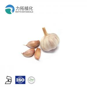 China White Plant Protein Powder Pure Odorless Garlic Extract Garlic Oil Allicin on sale