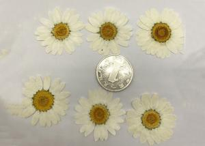 China White Chrysanthemum Hand Pressed Flowers For Wedding Party Favors / Gifts supplier