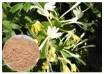 Anti Bacterial Natural Flower Extracts Chlorogenic Acid 5% Honeysuckle Flower Extract Powder