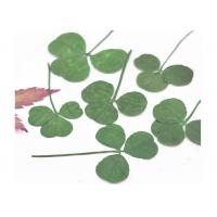 Original Green Shamrock Dried Flower Petal Crafts Gift Card Decoration For Holidays