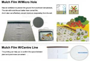 China Perorated weed barrier,mulch film with hole,pe film with dots-servering line,tomato mulch film,plastic nail,fasten sheet on sale