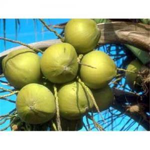 China Extracto fino amarillo claro natural de Serrulata del Serenoa del polvo, ácido graso on sale