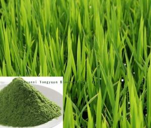 China Natural herbal extract good quality 10:1 Barley Grass Extract,Wheat grass P.E. TLC on sale
