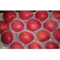 Big Bright Red Sweet Organic Apple Thick Skin From Shanxi QinGuan For Storage