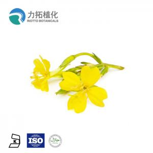 China 100% Natural Organic Evening Primrose Oil Liquid Anti-Inflammatory For Skin on sale