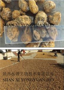 China Maca Extract 5:1 10:1 high quality, Resist tire, enhance energy on sale