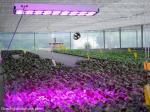 СИД 18 Сидлы растет светлый свет 650В завода СИД света сада