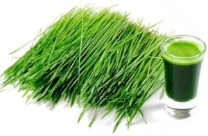 China Super Green  Organic Young Barley Grass Powder Health Care Product Factory Sale on sale