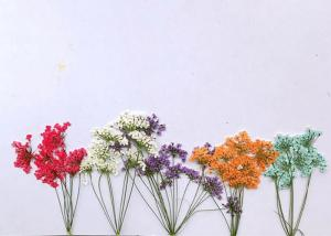China Multi Color Minoan True Lace Dried Flower Arrangements For Acrylic Gems Decoration on sale