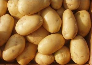 China Dutch Yellow Potato / Holland Long Potato With Nutritive Value on sale