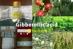 China Plant growth regulator / Gibberellic Acid (GA-3) /  High quality/ Good prices/ Terrastek on sale