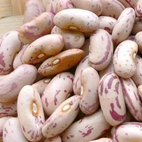 China Light Speckled Kidney Bean/Long Shape and Round Shape on sale